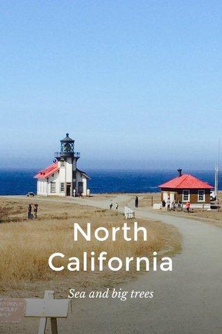 North California Sea and big trees