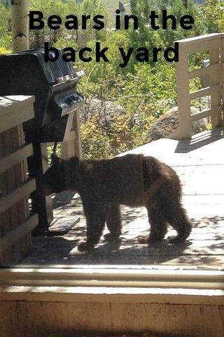 Bears in the back yard