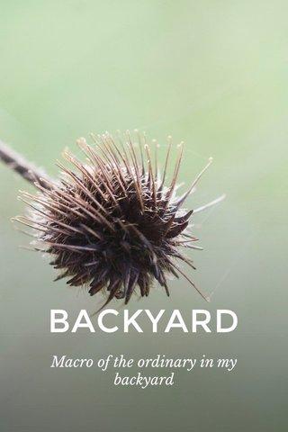 BACKYARD Macro of the ordinary in my backyard