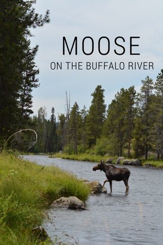 MOOSE ON THE BUFFALO RIVER