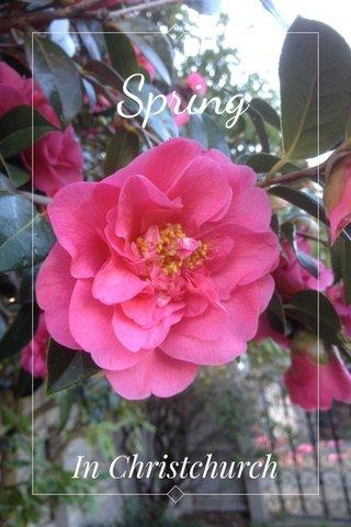 Spring In Christchurch