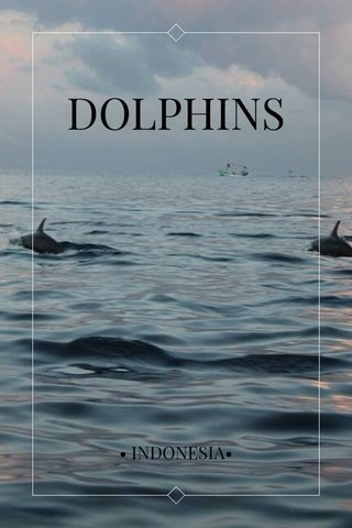 DOLPHINS • INDONESIA•