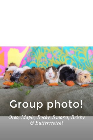 Group photo! Oreo, Maple, Rocky, S'mores, Brisby & Butterscotch!