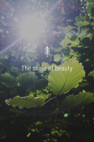 The shine of beauty The shine of beauty