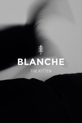 BLANCHE THE KITTEN