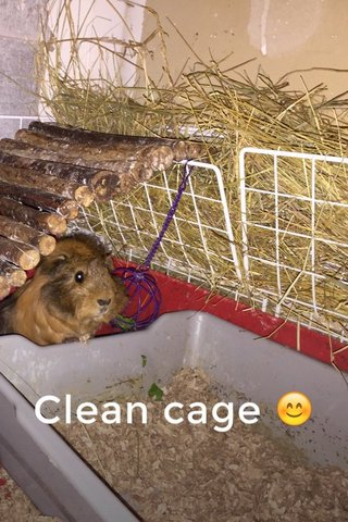 Clean cage 😊