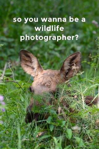 so you wanna be a wildlife photographer?