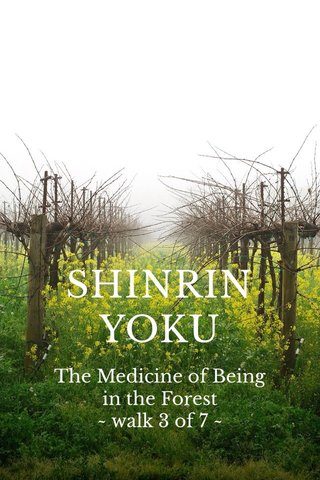 SHINRIN YOKU The Medicine of Being in the Forest ~ walk 3 of 7 ~