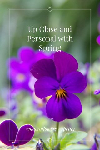 Up Close and Personal with Spring #macroflowers #spring