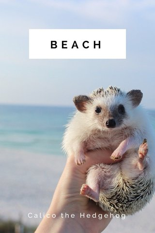 BEACH Calico the Hedgehog