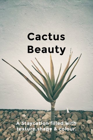Cactus Beauty A Staycation filled with texture,shape & colour.