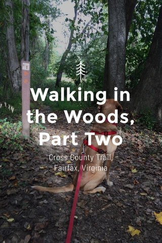 Walking in the Woods, Part Two Cross County Trail, Fairfax, Virginia