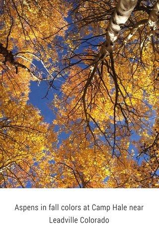 Aspens in fall colors at Camp Hale near Leadville Colorado