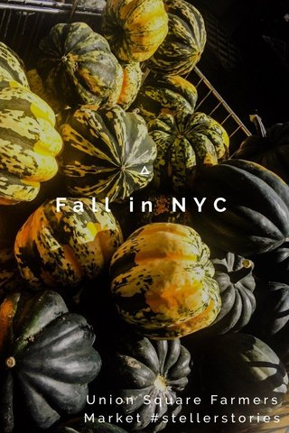 Fall in NYC Union Square Farmers Market #stellerstories