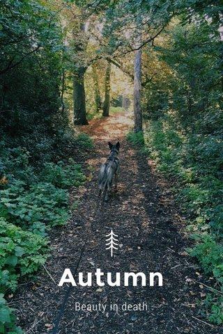 Autumn Beauty in death