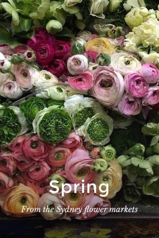 Spring From the Sydney flower markets
