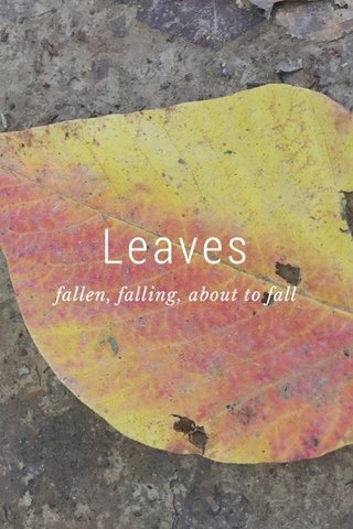 Leaves fallen, falling, about to fall