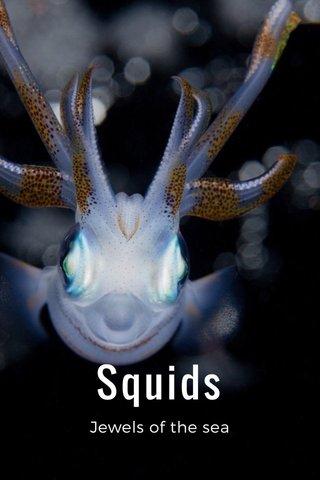 Squids Jewels of the sea