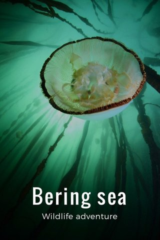 Bering sea Wildlife adventure