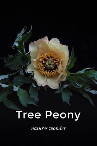 Tree Peony natures wonder
