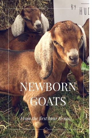 NEWBORN GOATS From the first hour to now