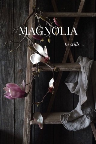 MAGNOLIA In stills....