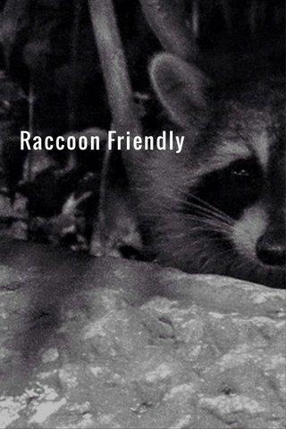 Raccoon Friendly
