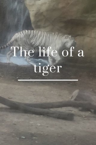 The life of a tiger