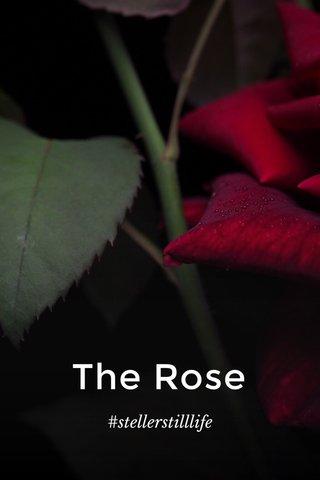 The Rose #stellerstilllife