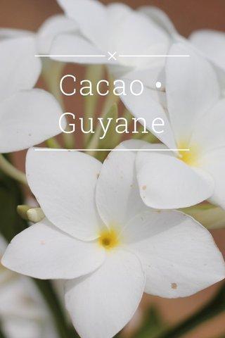 Cacao • Guyane