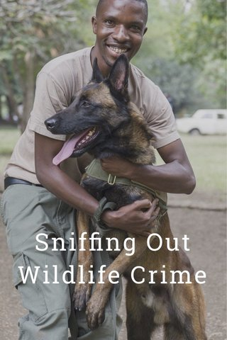 Sniffing Out Wildlife Crime