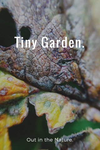 Tiny Garden. Out in the Nature.