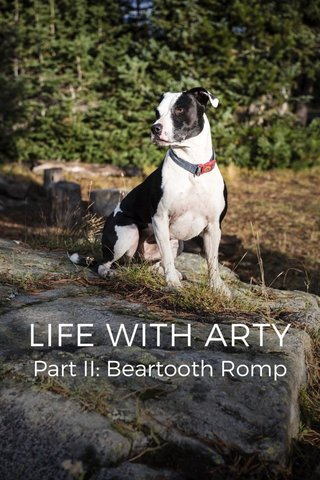 LIFE WITH ARTY Part II: Beartooth Romp