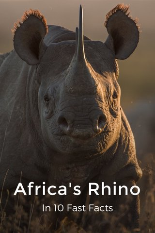 Africa's Rhino In 10 Fast Facts
