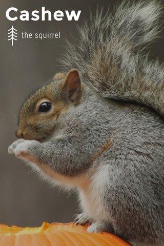 Cashew the squirrel