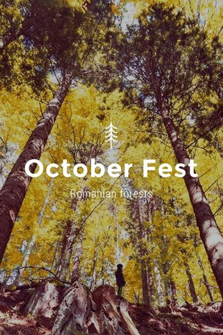 October Fest Romanian forests