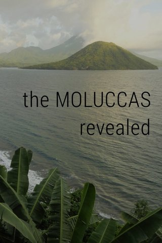 the MOLUCCAS revealed