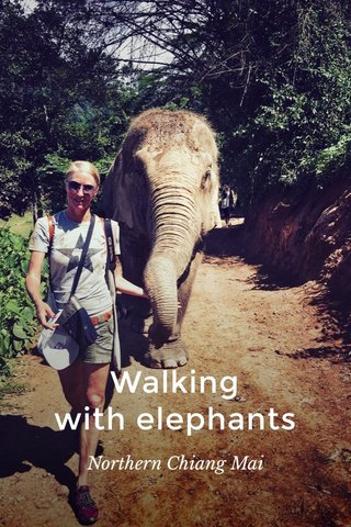 Walking with elephants Northern Chiang Mai