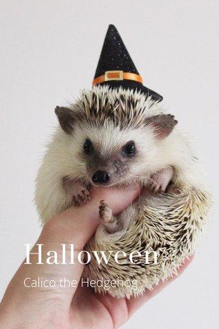 Halloween Calico the Hedgehog