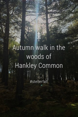 Autumn walk in the woods of Hankley Common #stellerfall