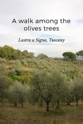 A walk among the olives trees Lastra a Signa, Tuscany