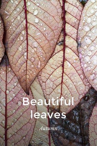 Beautiful leaves Autumn