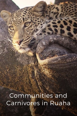 Communities and Carnivores in Ruaha