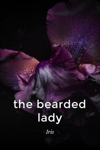 the bearded lady Iris
