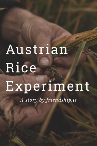 Austrian Rice Experiment A story by friendship.is