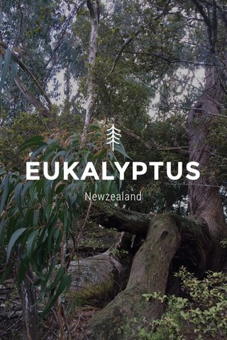 EUKALYPTUS Newzealand