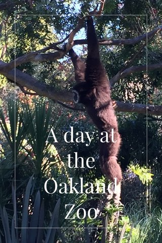 A day at the Oakland Zoo