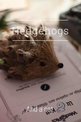 Hedgehogs And a cat.