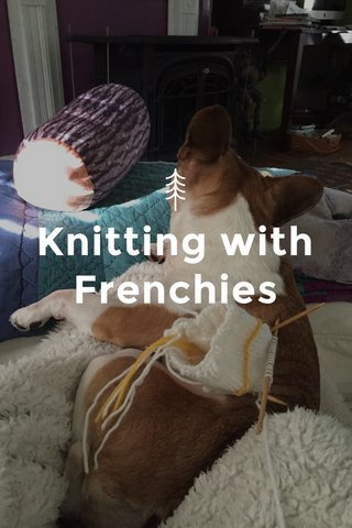 Knitting with Frenchies