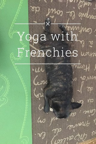 Yoga with Frenchies
